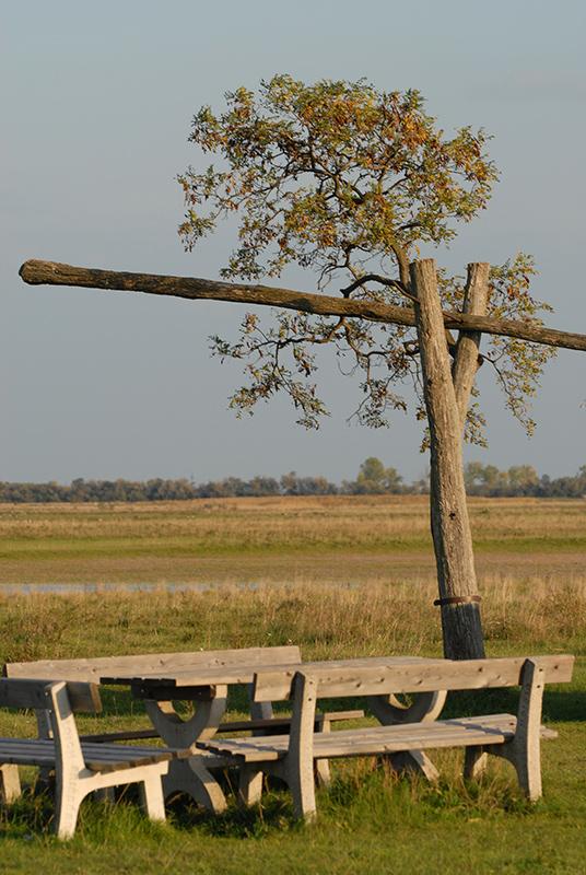 Holztisch mit zwei Bänken an der Langen Lacke