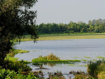 Wasserfläche und Wiesen im Hansag bei Tadten