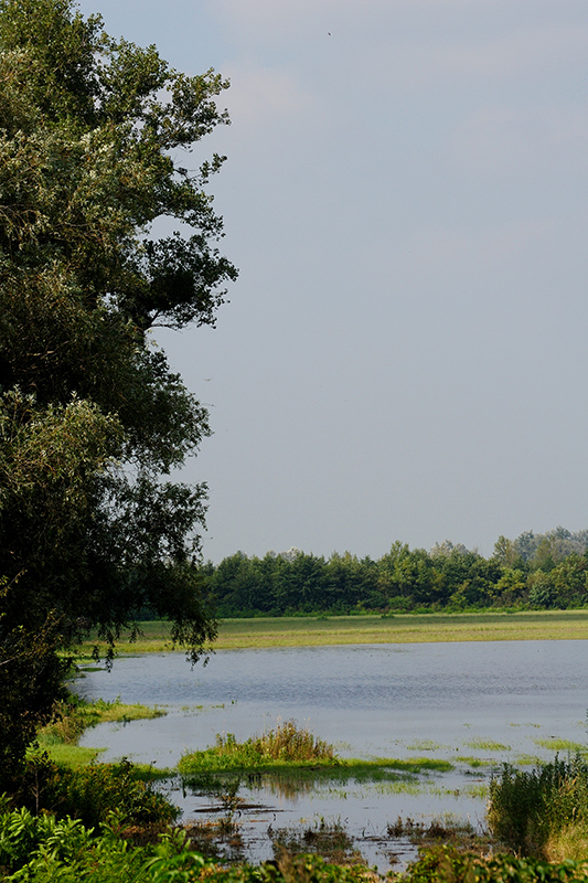 Naturjuwel Waasen - Hanság